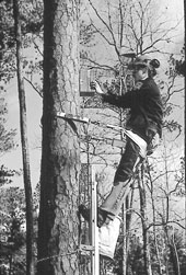 Photo: Lumberjack on tree