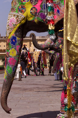 Colorful elephants form a cordon at the Amber Fort, outside Jaipur, India.